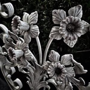 Iron Daffodils in Gray by Jennifer Hartnett-Henderson ©2013