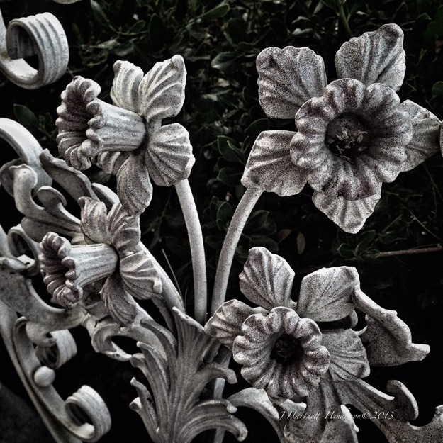 Iron Daffodils in Gray by Jennifer Hartnett-Henderson ©2013