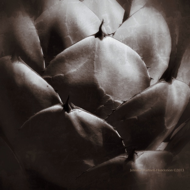 Agave Regina by Jennifer Hartnett-Henderson ©2013