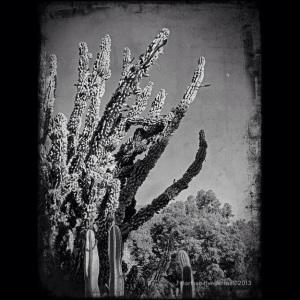 Moonrise over Prehistoric Cactus by Jennifer Hartnett-Henderson ©2013