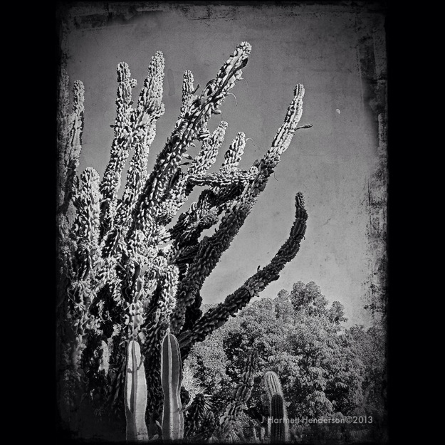 Moonrise over Prehistoric Cactus by Jennifer Hartnett-Henderson ©2013