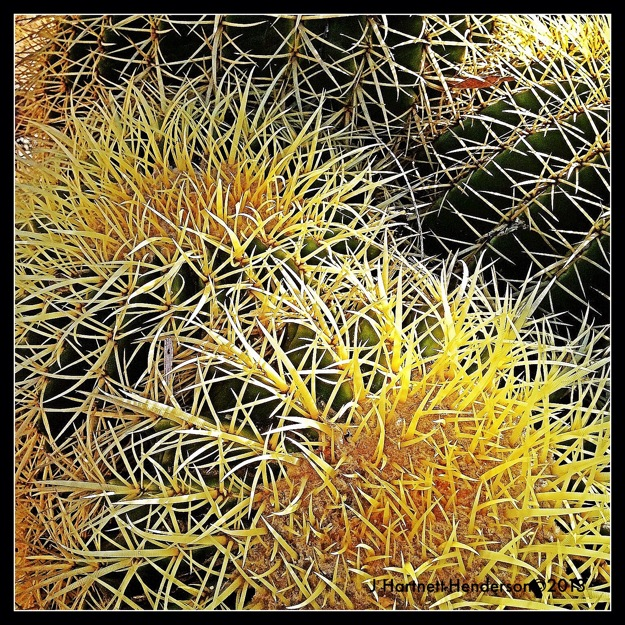 Barrel Cactus by Jennifer Hartnett-Henderson ©2013