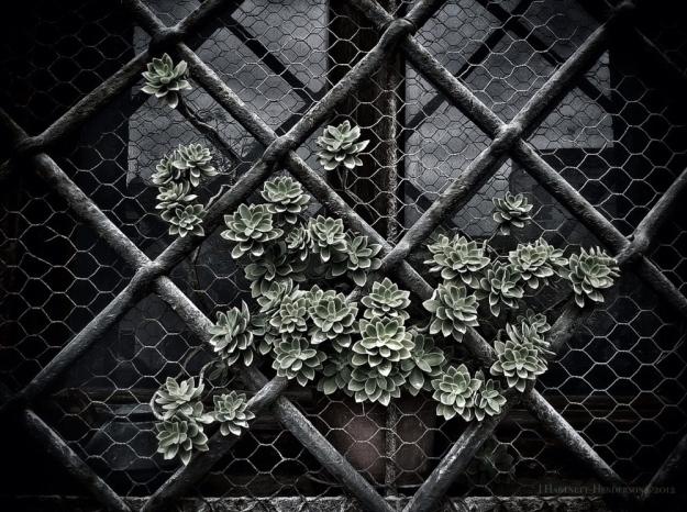 A Full Life in the Emptiest of Places by Jennifer Hartnett-Henderson © 2012