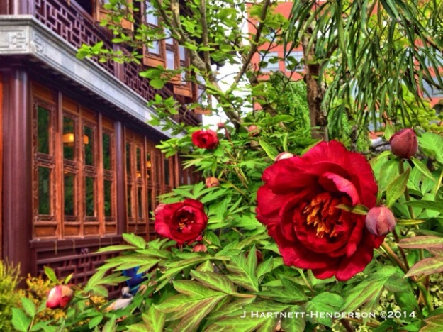 Tree Peony and Tea House by Jennifer Hartnett-Henderson ©2014