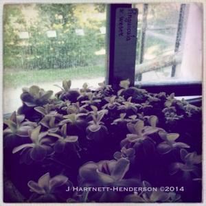 Sprouts by Jennifer Hartnett-Henderson ©2014