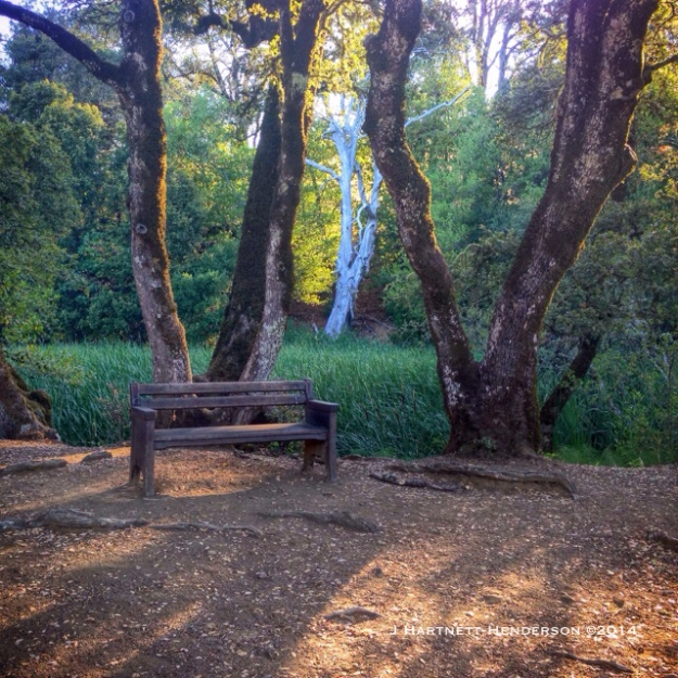 Favorite Bench by Jennifer Hartnett-Henderson ©2014