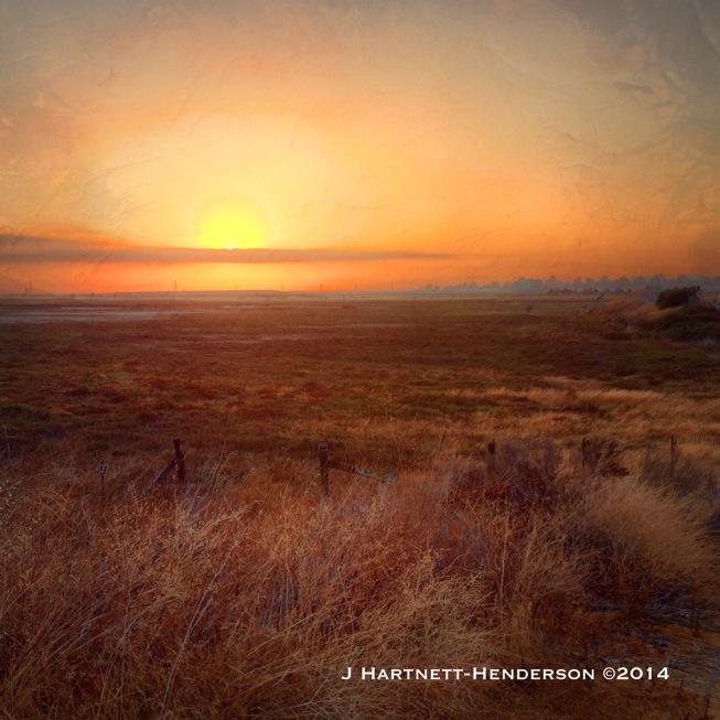 The Dearest Freshness by Jennifer Hartnett-Henderson ©2014