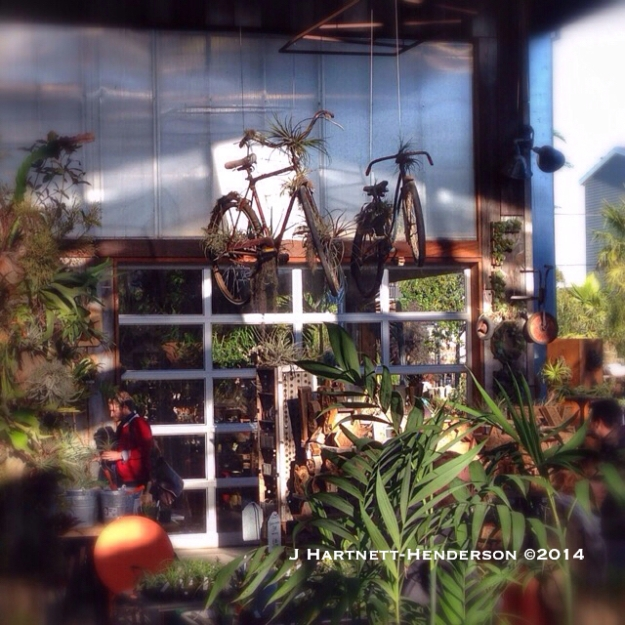 Flying Bicycle and Tillandsias by Jennifer Hartnett-Henderson ©2014
