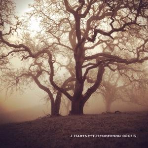 Ghosts by Jennifer Hartnett-Henderson ©2014