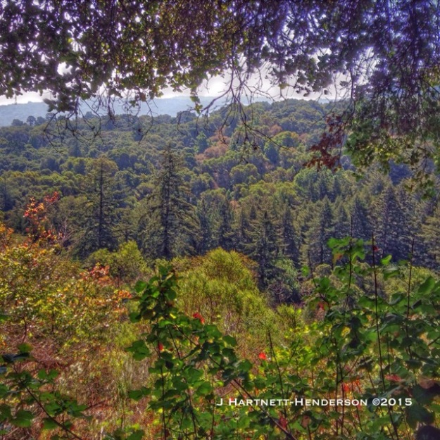 View from Hamm's Gulch Trail by Jennifer Hartnett-Henderson ©2015