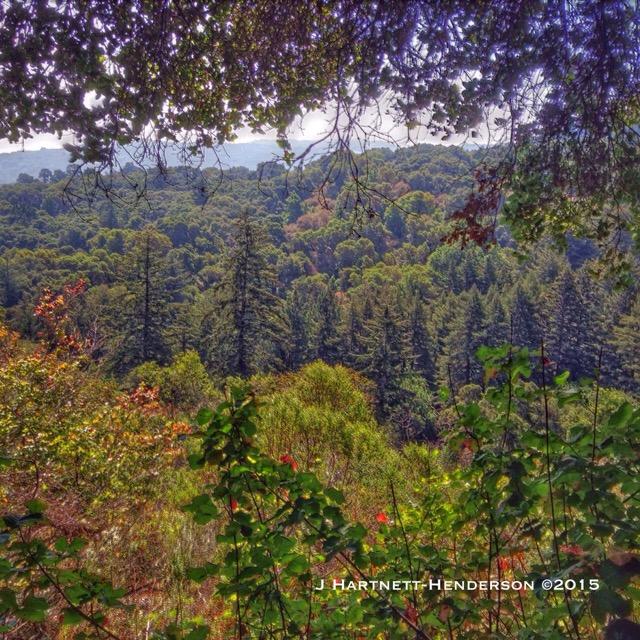 View from Hamm's Gulch Trail by Jennifer Hartnett-Henderson ©2015