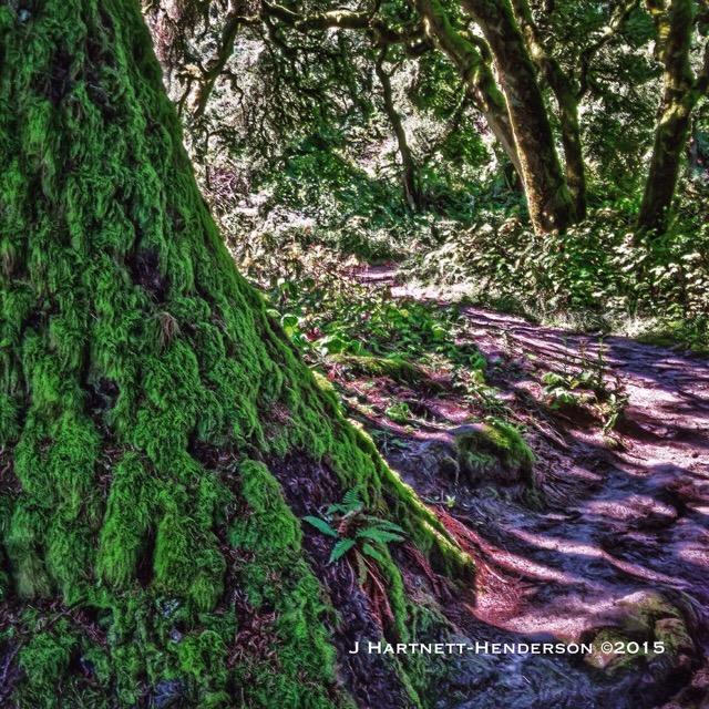 Moss at the Top by Jennifer Hartnett-Henderson ©2015