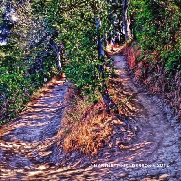 Switchback on Hamm's Gulch Trail by Jennifer Hartnett-Henderson ©2015